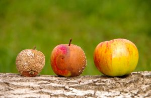 3 apples in a line to represent the good, the bad and the ugly. One is rotten, one is rotting, and one is ripe.