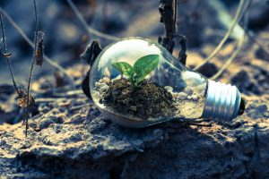 Green technologies: Clear light bulb with plant inside, pictured on grey rock